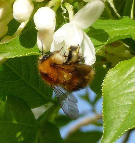 flower_-bee.jpg